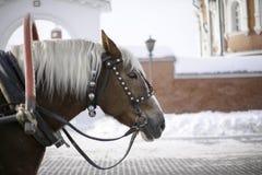 Un cavallo con una criniera bianca e un colpo lungo su una foto di profilo fotografia stock libera da diritti