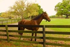 Un cavallo da corsa futuro ad un addestramento facilty se Florida Fotografia Stock Libera da Diritti