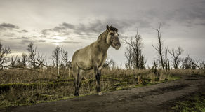 Un cavallo del yound che cammina intorno nel terreno incolto di inverno. Fotografia Stock