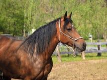 La testa del cavallo immagine stock