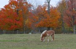 Un cavallo di Brown che sta in un prato in autunno Fotografia Stock Libera da Diritti