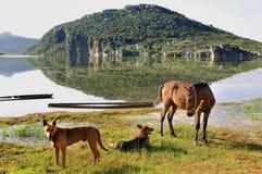 Un cavallo e due cani immagine stock libera da diritti