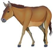 Un cavallo marrone Immagini Stock