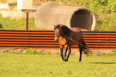 Un cavallo nell'iarda Fotografia Stock Libera da Diritti
