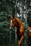 Un cavallo nella foresta con un bello capo delle foglie fotografia stock