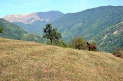 Un cavallo nella natura selvaggia Fotografia Stock Libera da Diritti