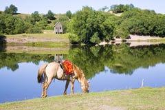 Un cavallo nella parte anteriore del lago Fotografia Stock Libera da Diritti