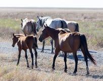 Un cavallo in un pascolo nel deserto Fotografie Stock Libere da Diritti