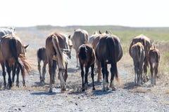 Un cavallo in un pascolo nel deserto Fotografia Stock Libera da Diritti