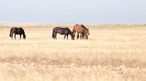 Un cavallo in un pascolo nel deserto Immagine Stock