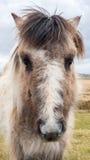 Un cavallo selvaggio Fotografia Stock