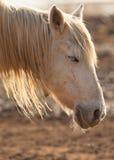Un cavallo sonnolento Fotografia Stock