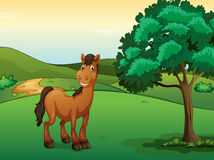 Un cavallo sorridente Fotografia Stock Libera da Diritti