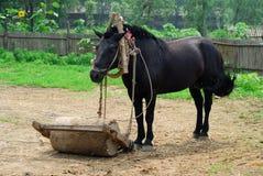 Un cavallo sta funzionando nel villaggio Fotografia Stock Libera da Diritti