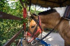 Un cavallo sta mangiando il fieno Fotografia Stock Libera da Diritti