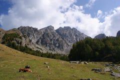 Un cavallo su un prato della montagna Fotografie Stock