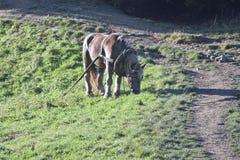 Un cavallo sulla prateria fotografie stock