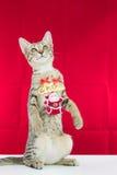 Un cavo il Babbo Natale di legatura del gatto per natale Immagini Stock Libere da Diritti