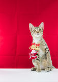 Un cavo il Babbo Natale di legatura del gatto per natale Fotografie Stock Libere da Diritti