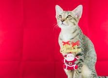 Un cavo il Babbo Natale di legatura del gatto per natale Fotografia Stock