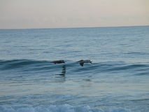 Un cepillo con el mar Foto de archivo libre de regalías