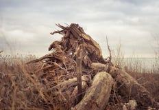Un ceppo capovolto in un campo erboso fotografia stock