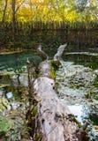 Un ceppo che è caduto nell'acqua di uno stagno in autunno in un parco fotografia stock