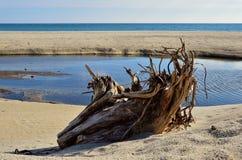 Un ceppo sulla spiaggia Immagine Stock