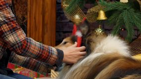 Un cercle avec des klaxons de renne a été mis sur le chien clips vidéos