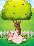 Un cerdo juguetón debajo del cerezo Foto de archivo libre de regalías