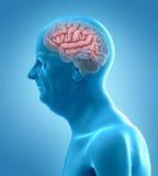 Un cerebro de los viejos manilustración del vector