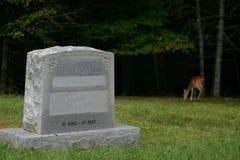 Un cerf commun à la tombe Images libres de droits