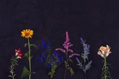 Un certain nombre de jardin de branches des fleurs tôt sur un backgrou foncé photos libres de droits
