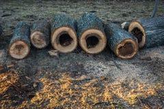 Un certain nombre de morceaux en bois sciés avec des cavités se sont étendus dans la ligne images stock