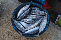 Un certain poisson frais pêché par des pêcheurs sont placés à l'intérieur du bassin photos stock