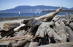 Un certo driftwood sulla spiaggia Immagine Stock