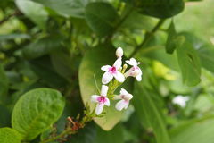 Un certo fiore Fotografia Stock Libera da Diritti