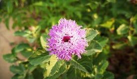 Un certo fiore fotografie stock