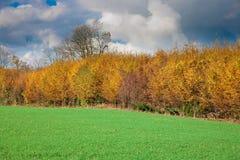 Un certo numero di alberi fotografia stock
