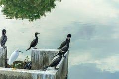 Un certo uccello nero ha stato su nella parte anteriore uno scorrimento dell'acqua che riflette il cielo fotografie stock
