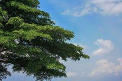 Un cespuglio con cielo blu con la nuvola Fotografia Stock Libera da Diritti