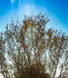 Un cespuglio luminoso sotto il sole caldo del deserto fotografia stock
