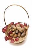 Un cestino delle noci e un'edera si ramificano. Fotografia Stock