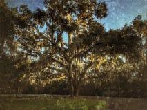 Un chêne puissant seul se tient image stock