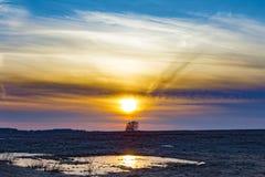 Un chêne seul dans un domaine au coucher du soleil photos stock