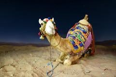 Un chameau dans un lumineux coloré couvrant se trouve sur le sable la nuit photo libre de droits