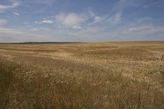 Un champ énorme rempli du blé Un tir détaillé des usines images stock
