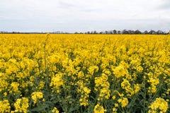Un champ complètement avec des fleurs Image stock