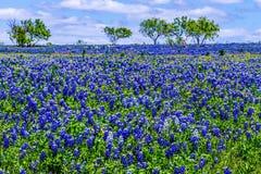 Un champ couvert avec Texas Bluebonnet célèbre Photo stock
