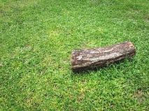 Un champ d'herbe verte en bois d'identifiez-vous photo libre de droits